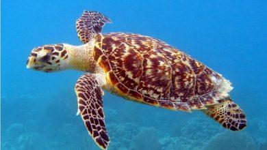 Photo of En una playa de Brasil que la gente abandonó por la cuarentena nacieron 97 tortugas en peligro de extinción