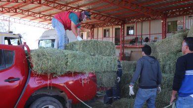 Photo of La Ligua continúa apoyando al mundo rural con fardos a precios justos