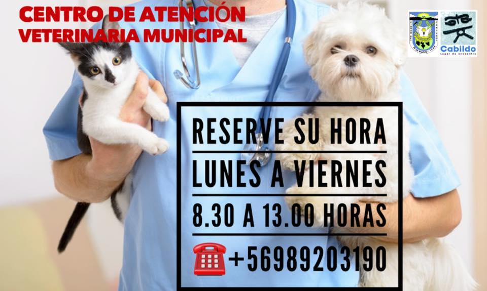 centro veterinario municipal cabildo