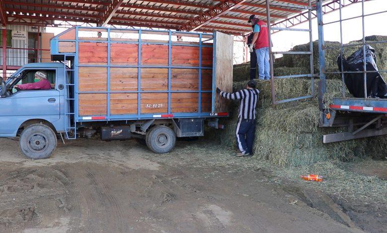 Photo of Forraje Popular: beneficio municipal permite mantener ganado de familias campesinas Liguanas afectadas por la sequía