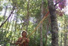 Photo of Conaf amplía hasta el 3 de septiembre plazo para postular a concursos del Fondo de la Ley de Bosque Nativo