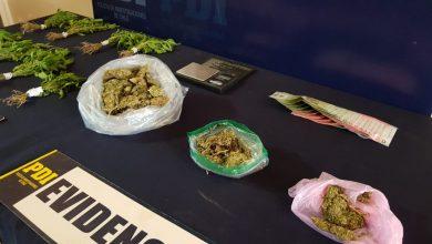 Photo of PDI erradica foco de microtráfico de cannabis en Los Andes