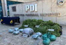 Photo of PDI Valparaíso detecta plantación de marihuana en Los Vilos